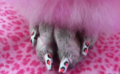 Dog Manicure